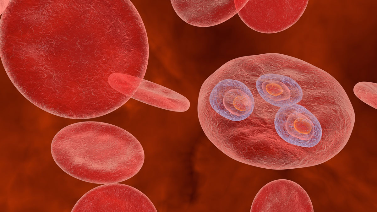 Malaria. Plasmodium vivax in early trophozoite ring stage inside red blood cell